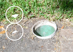Apparently, someone drove over the cap to the sewer pipe and destroyed it. Fragments of the PVC cap are circled.