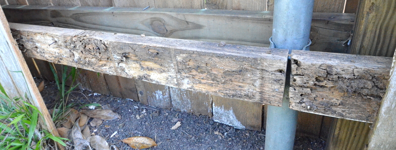 A second clear example of termite damage to a fence rail.